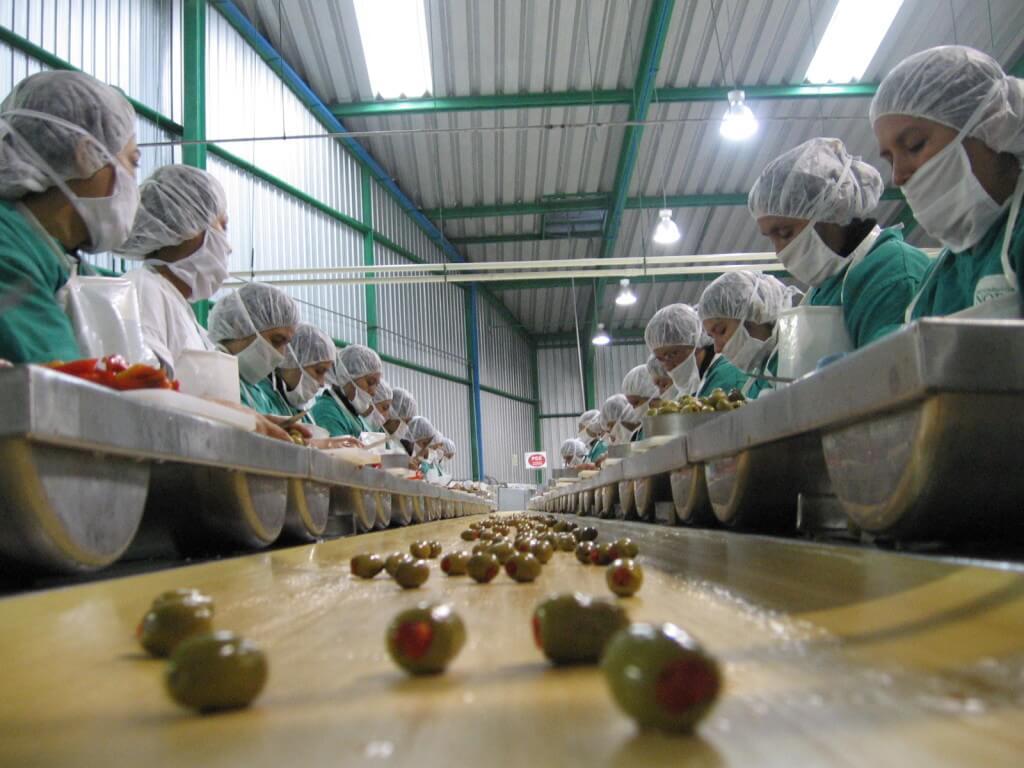 Industria-aceitunas-1024x768
